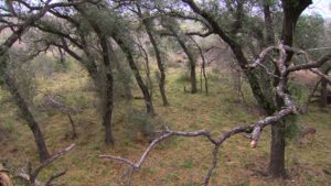 Bow Hunting a New Stand - View from the stand.