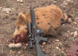 Hog Hunting Smith and Wesson MP10 6.5 Creedmoor