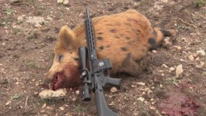 Smith and Wesson MP10 6.5 Creedmoor hunting Hogs